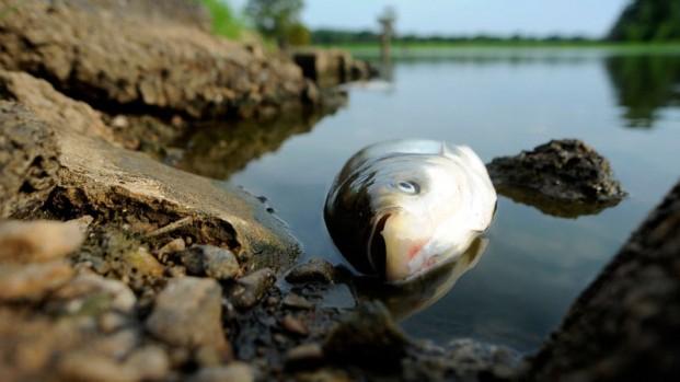 """Maccarese, animali morti nel fiume Arrone. Vincenzo Galizia: """"disastro ecologico"""""""