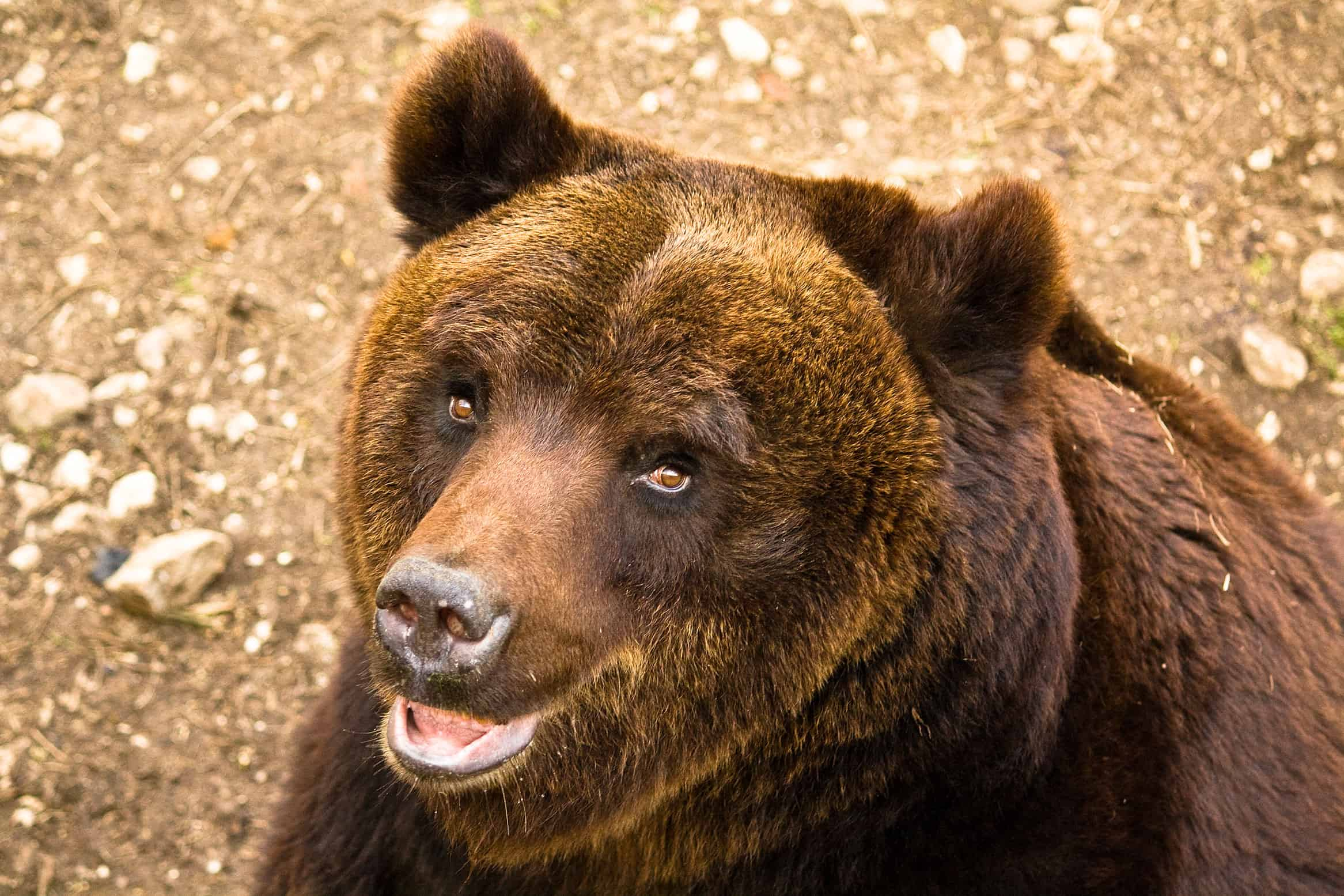 """Abruzzo, Galizia e Rampin: """"Massima determinazione per catturare gli uccisori di orsi"""""""