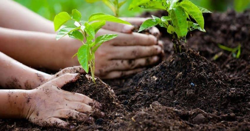 Un albero per ogni neonato!  Un obbligo per i Comuni previsto dalla legge. Norma poco applicata ma ci sono novità.